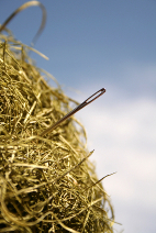 Image showing a needle in a haystack